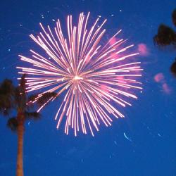 Pink Fireworks